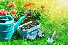 Ainda-vida de jardinagem e flor-crescente home da flor Imagem de Stock Royalty Free