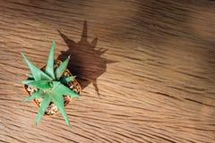 Ainda vida de três plantas do cacto no fundo de madeira Tex do vintage fotografia de stock