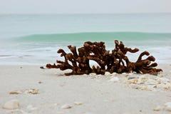 Ainda vida do coral na praia com oceano Fotografia de Stock