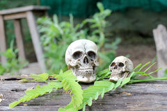 Ainda vida do crânio humano na natureza Imagens de Stock