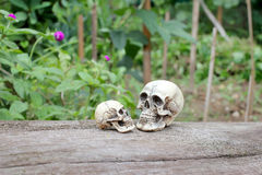 Ainda vida do crânio humano na natureza Fotografia de Stock Royalty Free