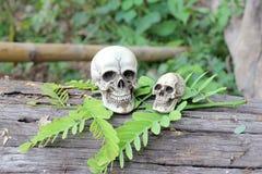 Ainda vida do crânio humano na natureza Foto de Stock Royalty Free