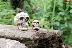 Ainda vida do crânio humano na natureza Imagens de Stock Royalty Free