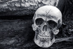 Ainda vida do crânio no fundo secado da árvore Fotografia de Stock Royalty Free