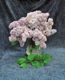 Ainda vida do lilás Imagem de Stock