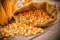 Ainda vida do milho de semente e do milho secado imagens de stock royalty free