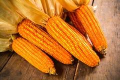 Ainda vida do milho secado imagens de stock royalty free