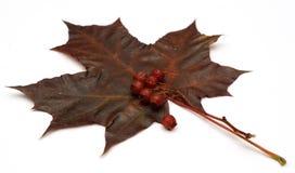 Ainda-vida do outono Imagem de Stock