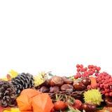 Ainda-vida do outono - castanhas e uma cinza de montanha Fotografia de Stock Royalty Free