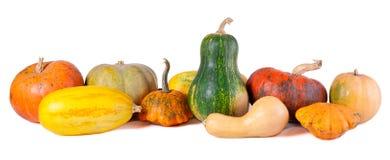 Ainda-vida do outono com abóboras Imagens de Stock