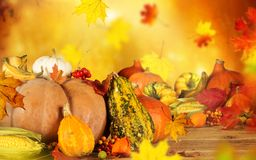 Ainda-vida do outono com abóboras e folhas Foto de Stock Royalty Free