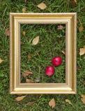 Ainda-vida do outono com maçãs e quadro dourado Foto de Stock