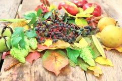 Ainda-vida do outono com uva, as maçãs e o mais selvagens Imagem de Stock