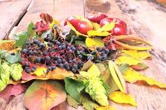 Ainda-vida do outono com uva, as maçãs e o mais selvagens Fotos de Stock