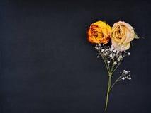 Ainda vida dos botões cor-de-rosa murchados com planta Imagem de Stock Royalty Free
