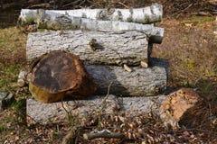 Ainda vida dos galhos e de ramos de madeira empilhados do lugar do fogo na floresta Foto de Stock Royalty Free