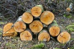 Ainda vida dos galhos e de ramos de madeira empilhados do lugar do fogo na floresta Foto de Stock