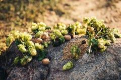 Ainda vida dos lúpulos, sementes do trigo, nozes, datas na pedra do granito Luminoso Fotografia de Stock Royalty Free