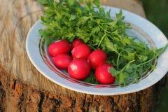 Ainda vida dos vegetais fora Imagem de Stock Royalty Free