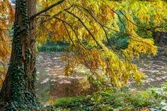 Ainda a vida e o lugar calmo perto da água no outono com as folhas douradas em Bratislava estacionam Imagens de Stock Royalty Free