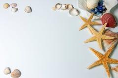 Ainda vida - escudos e estrela do mar fotografia de stock