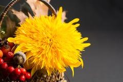 Ainda vida floral com o girassol em cores do outono no backgr escuro Foto de Stock Royalty Free