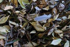 Ainda vida - folhas de outono Foto de Stock Royalty Free