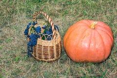 Ainda vida: grande abóbora madura e uma cesta das uvas Imagens de Stock