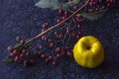 Ainda vida - ikebana do ramo com bagas e o marmelo secados Fundo de matéria têxtil foto de stock