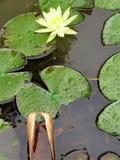 Ainda vida - jardins botânicos - São Paulo - Brasil foto de stock
