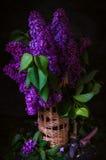 Ainda vida, lilás, ameixa seca Foto de Stock Royalty Free