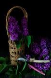 Ainda vida, lilás, ameixa seca Imagem de Stock