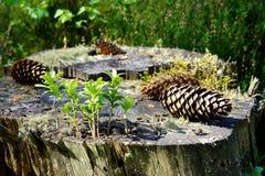 Ainda vida na floresta Imagem de Stock