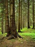 Ainda vida na floresta spruce Fotos de Stock