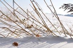 Ainda-vida na neve Fotografia de Stock