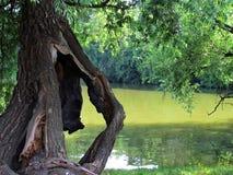 Ainda vida natural com a árvore danificada velha, wiillow quebrado na água Imagem de Stock