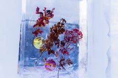 Ainda vida no gelo Imagem de Stock Royalty Free