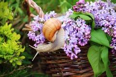 Ainda vida no jardim Imagem de Stock