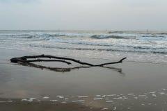 Ainda vida no mar Fotos de Stock