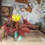 Ainda vida: o ramalhete pequeno da flor amarela e da uva roxa sae em um vaso azul Foto de Stock
