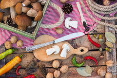 Ainda vida: Partes dos cogumelos, das pimentas e das especiarias brancos Foto de Stock Royalty Free