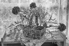 Ainda vida preto e branco Fotografia de Stock