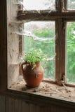 Ainda vida rústica com as flores selvagens no jarro marrom da argila Fotos de Stock Royalty Free