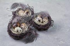 Ainda vida rústica - ovos de codorniz no ninho na superfície concreta áspera Imagens de Stock