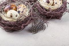 Ainda vida rústica - ovos de codorniz no ninho na superfície concreta áspera Foto de Stock Royalty Free