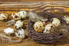 Ainda vida rústica - ovos de codorniz no ninho na superfície concreta áspera Fotos de Stock Royalty Free