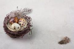 Ainda vida rústica - ovos de codorniz no ninho na superfície concreta áspera, close-up com lugar para o texto Fotos de Stock Royalty Free