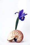 Ainda vida, Seashell do nautilus e íris roxa Fotos de Stock Royalty Free