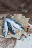 Ainda vida sobre a pesca desportivo para a cavala Imagens de Stock