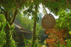 Ainda vida tropical Imagens de Stock Royalty Free